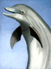 Dolphin in Pastel by Christine Boyce