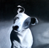 Jack Russell Terrier named Fat Dog in Pastel by Christine Boyce