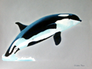 Orca in Prismacolor by Christine Boyce