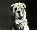 Shar-Pei in Pastel by Christine Boyce